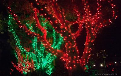 Virtual Holiday Tree Lighting on 11/30